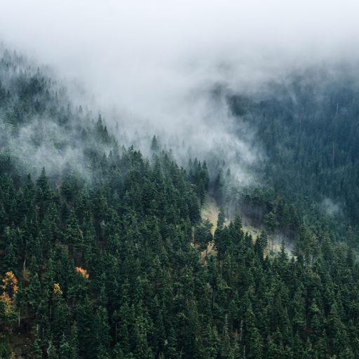 Mgła nad lasem