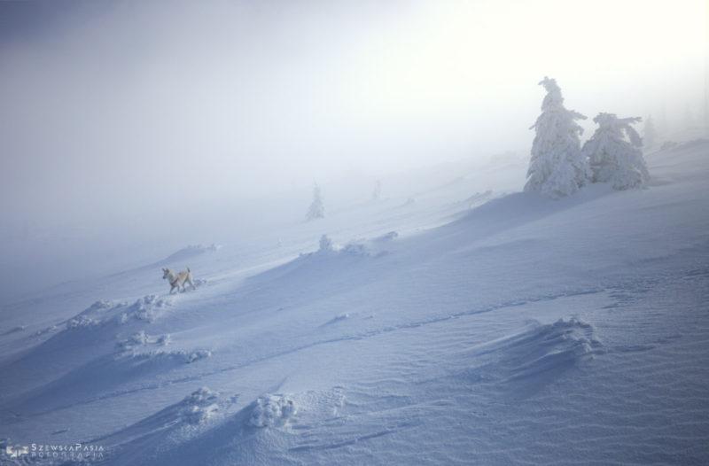 Magiczna zima w Karkonoszach