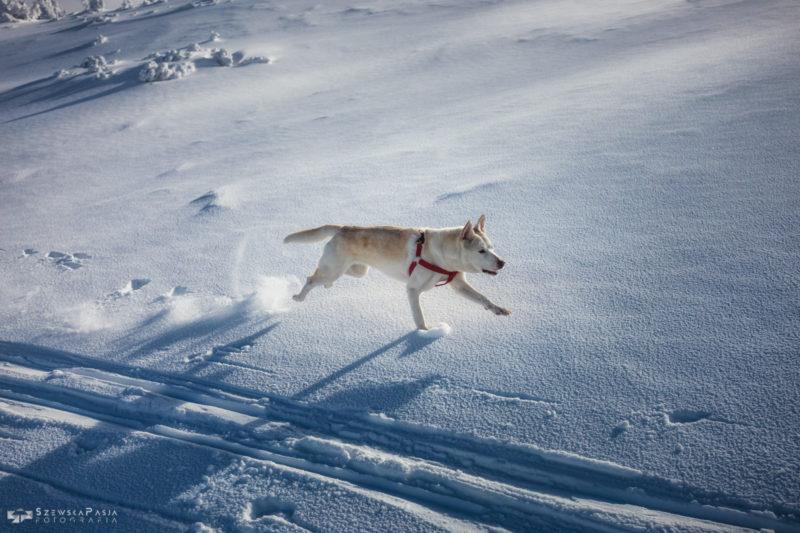 Pies w sniegu