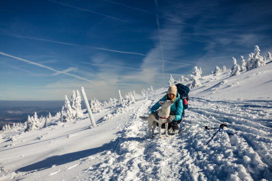 Zima z psem w Karkonoszach
